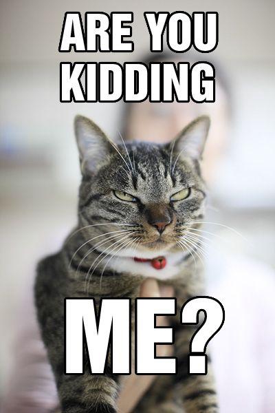 cat: Animal Captions, Kitty Cat, Common Cat, Pet, Crazy Cat, Cat Behavior, Funny Animal, Cat Crazy, Animal Cat