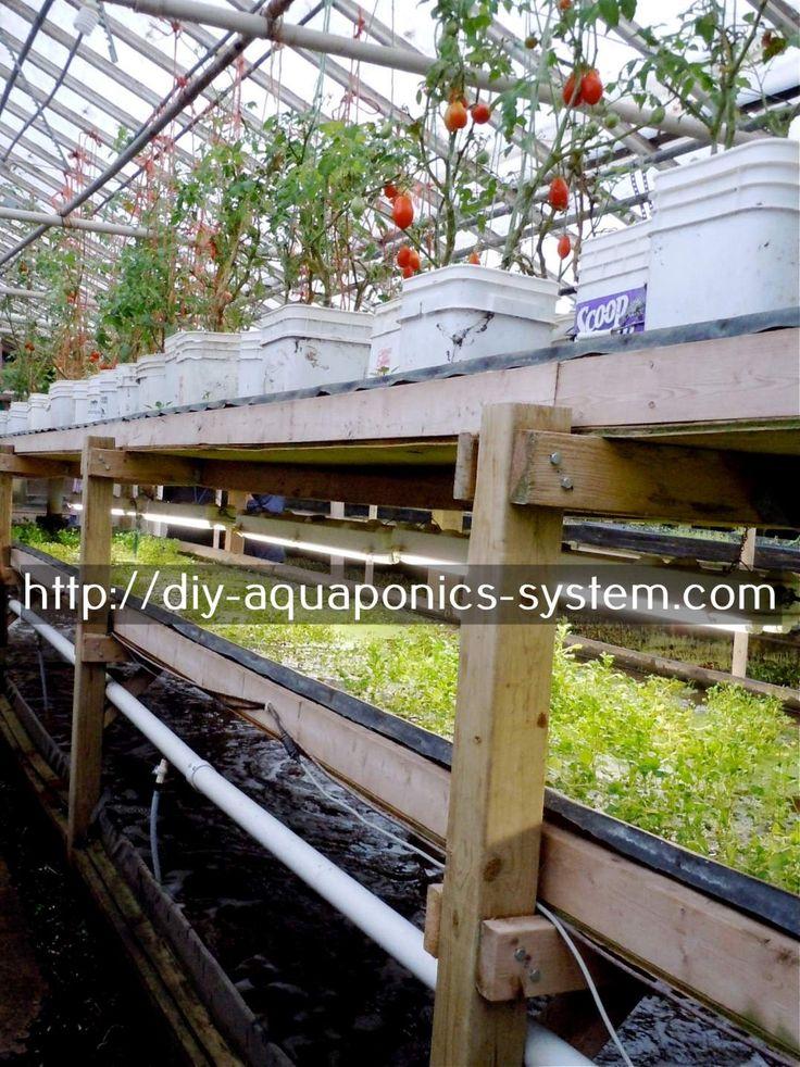 aquaponics supplies - how to build an aquaponics system step by step.aquaponics system singapore 5164866109