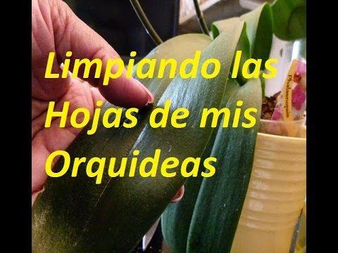 ORQUIDEAS - LIMPIEZA DE HOJAS.CADA QUIEN CON SU LIBRITO. - YouTube