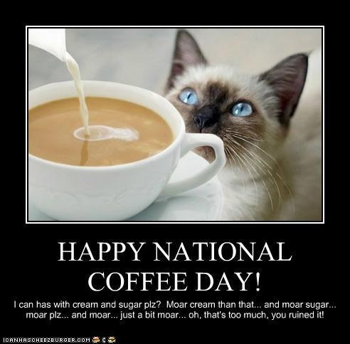 More, more, too much.: Coffee Ahol, Happy National, Coffee Coffee Coff, Caffeine, National Coffee, Coffee Uh, Coff Addiction, Cat Pictures, Coff Junkie
