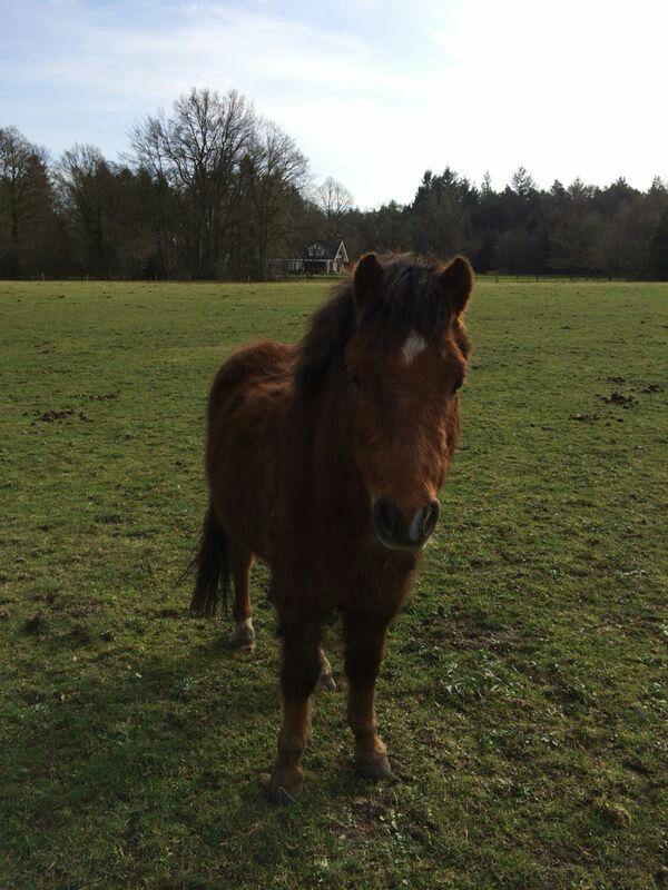 Buddy.. ons kleine ondeugende pony..!