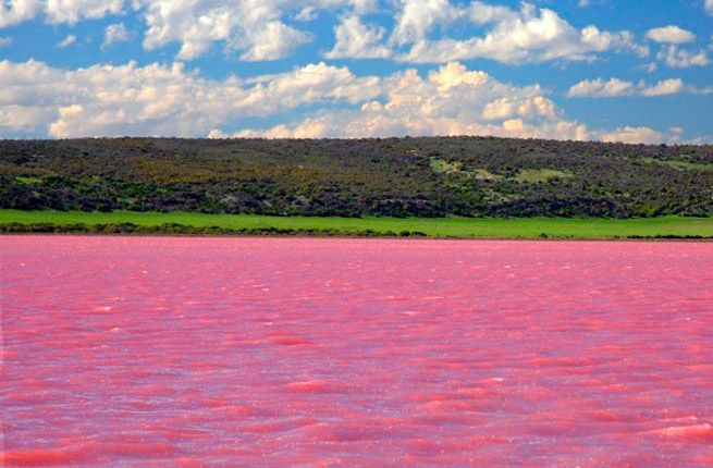 Once a Year This Lake Turns Completely Pink