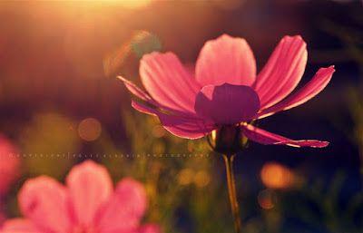 Pölcz Klaudia - kisklau: Pillangóvirágok