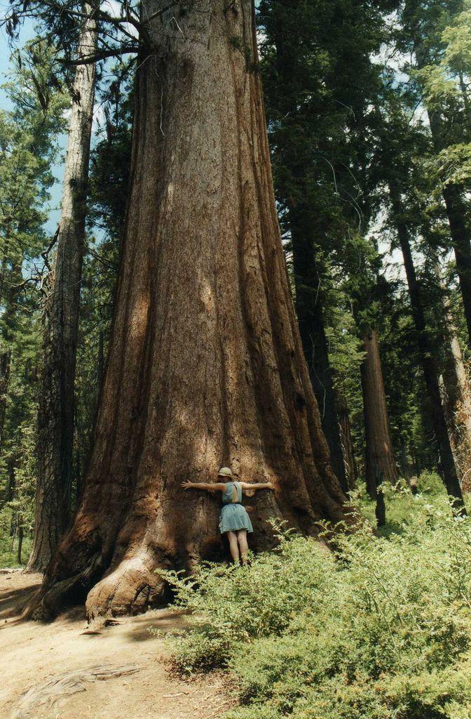 I miss the Redwoods