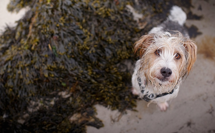In search of the perfect Mutt.