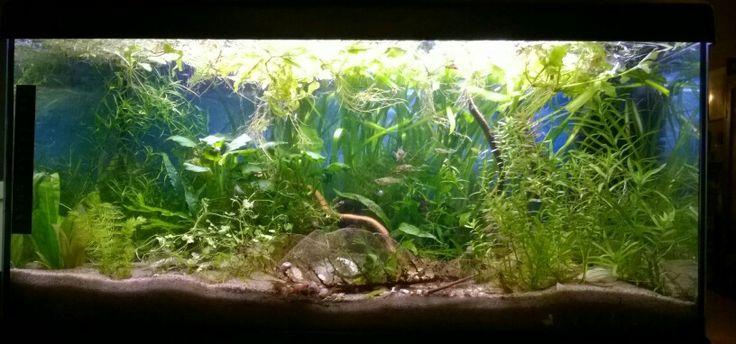My aquarium 54 l