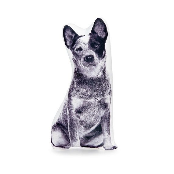 Blue Heeler Australian Dog Sheep Dog Dog cushion Dog