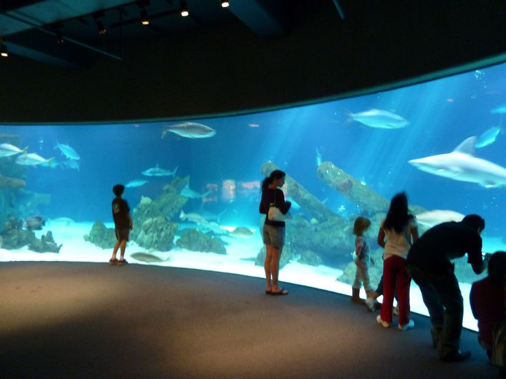... Waymark - Albuquerque BioPark Aquarium - Albuquerque, New Mexico