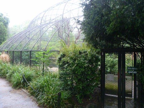 34 best images about pheasant pen ideas on pinterest - Zoo jardin des plantes ...