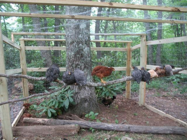 Http Www Backyardchickens Forum Uploads 90403 Inside