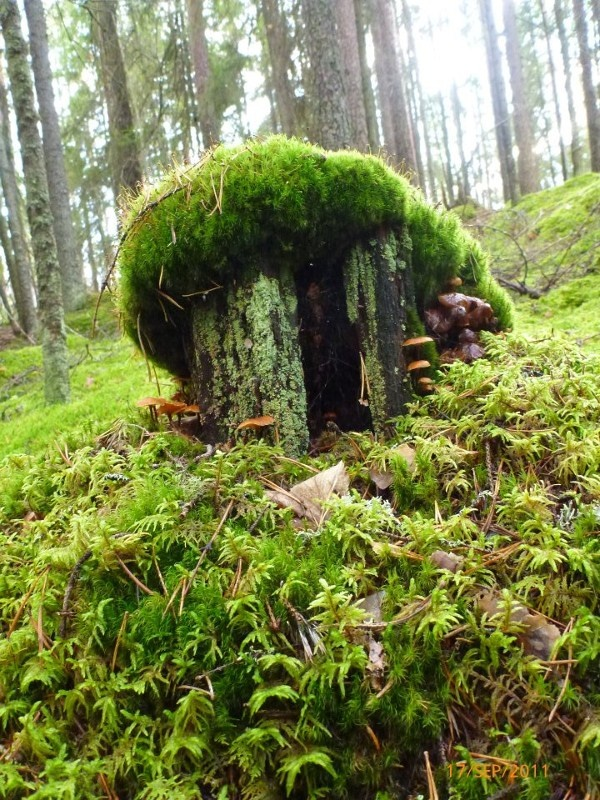 Märchenwald in #Kouvola