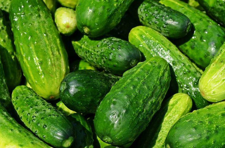Mangiare almeno un cetriolo al giorno offre, infatti, una serie di importanti benefici per la salute. Scopriamoli insieme...