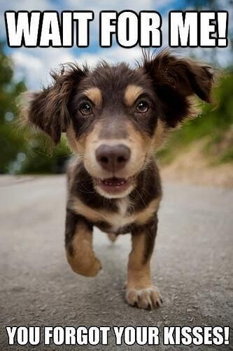 All about #dogs #cats #pets Click here