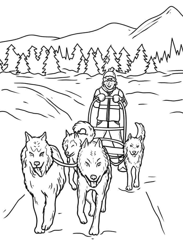Pin By Jarrod Coomer On Iditarod Winter 2015 2016 Dog Coloring Page Dog Sledding Dog Sketch