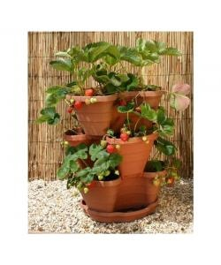 Patio Strawberry or Herb Planter simple to use and only £16.64.