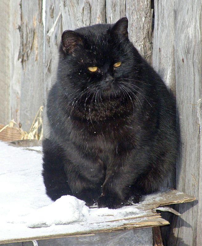 Толстые кошки картинки с надписями
