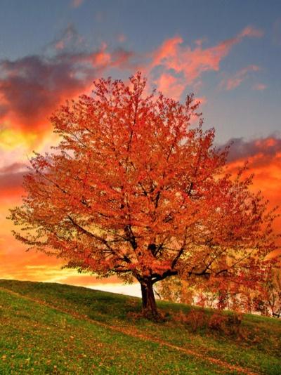 Gorgeous FALL in all it's glory!!Orange, Fall Beautiful, Fall Leaves, Autumn Leaves, Seasons, Autumn Fall, Colors, Fall Autumn, Fall Trees