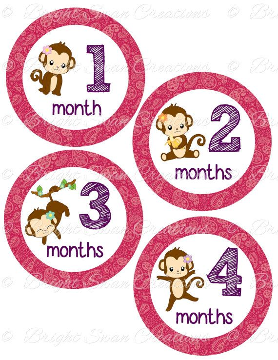 Monkey Baby Month Stickers 1 12 Months Baby Monthly