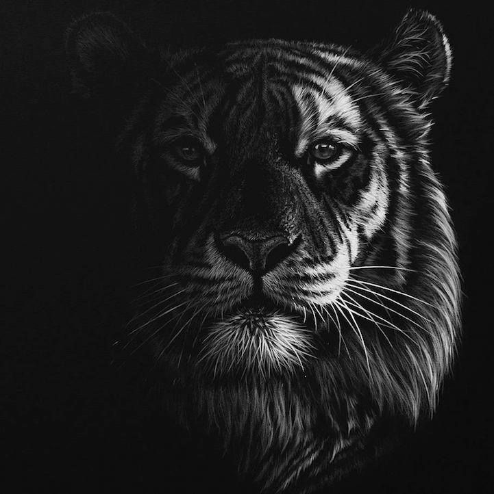Best BW ART Images On Pinterest Painting Charcoal And Creative - Stunning drawings of endangered wild animals by richard symonds