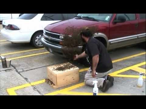 Huge Honeybee Swarm On SUV