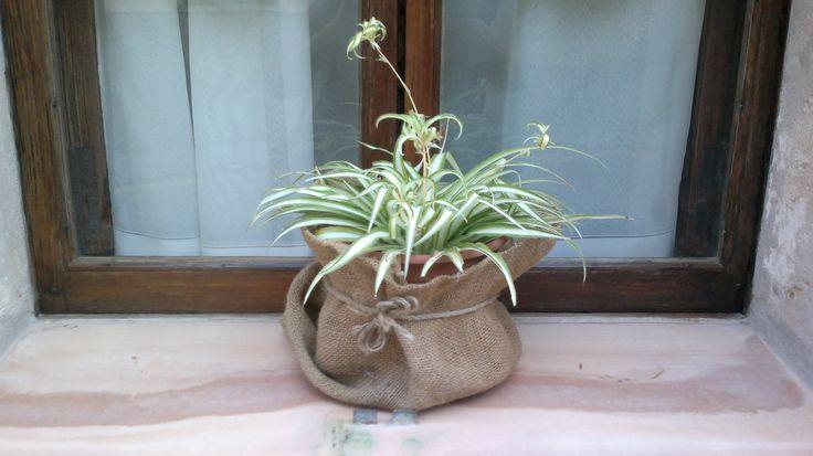 Cossiol de sac per les plantes
