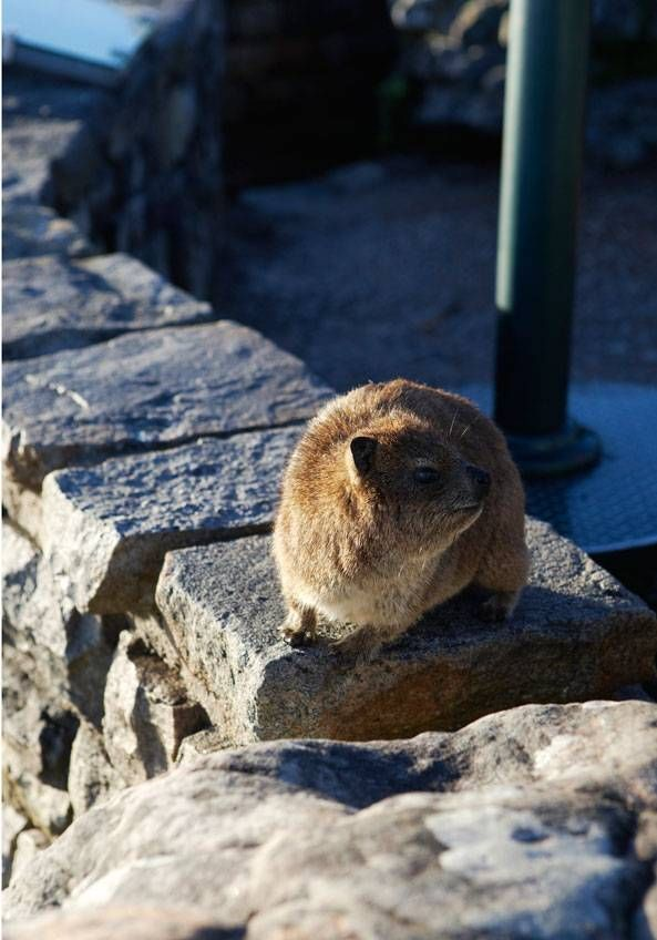 Fauna and flora – Gallery – Table Mountain Aerial Cableway | Official Website