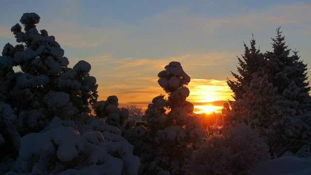 LENS and COVER: Snowy Trees and Sunset
