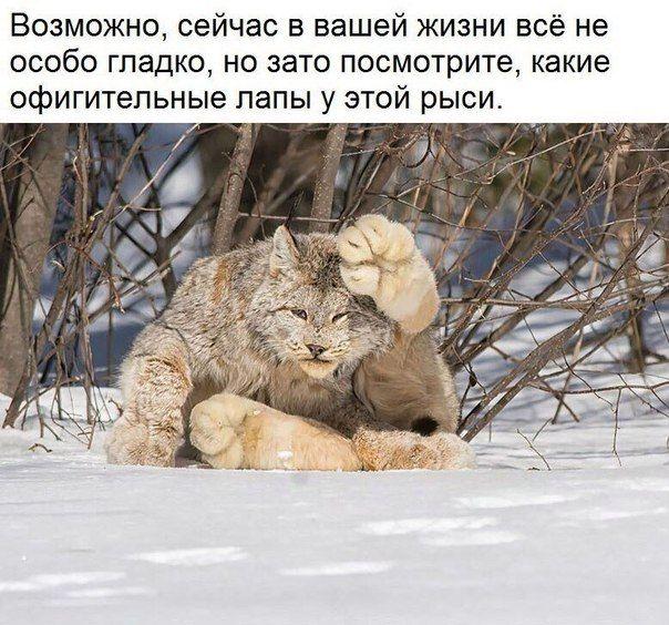 – Сынок, а у вас в садике уже топят? – Нет, папа, пока только в угол ставят… http://cultiwc.ru/synok-a-u-vas-v-sadike-uzhe-topyat-net-papa-poka-tolko-v-ugol-stavyat/  Убегает Пятачок от волка. Волк: – Пятачок, догоню – будешь сосать. Пятачок подбегает к дому Винни, стучится в дверь: – Винни, открой! – Кто там? – Это я, пята-чмок-чмок-чмок. *** Три часа ночи. Муж с женой спят. Вдруг звонок в дверь. Муж, матерясь,идет открывать. На пороге стоит мужик, очевидно поддатый:– Друг, пойдем со мной…