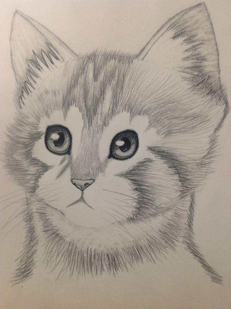 Cartoon Pencil Drawing Picture Animals   Drawing and ...