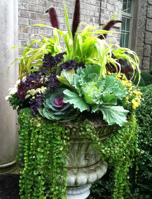 A gorgeous container garden with ornamental cabbages and creeping jenny--perfect for Fall!