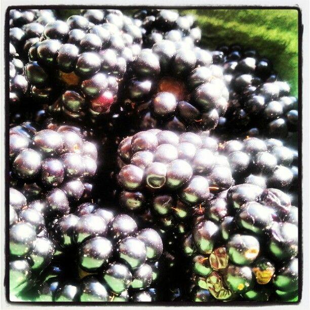 Fresh local blackberry love