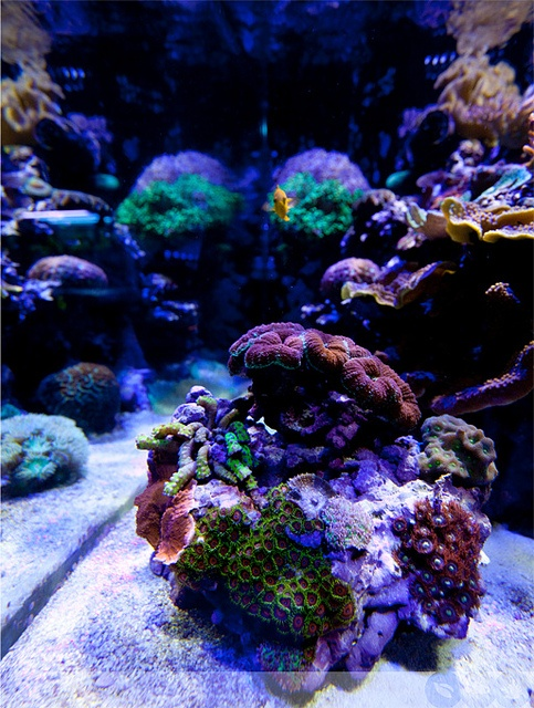 Cannon Aquarium : by Ecoxotic Cannon LED pendants, 100 watts. The reef aquarium ...