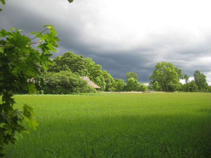 Relaxing & harmonious Saaremaa countryside with its fields, maples & stone walls on a rainy summer day