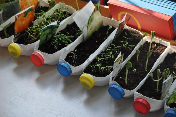 Zielony-ogródek-w-domu.-Recykling