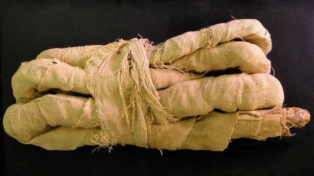 Momie de cobra : Cet exemple date probablement de 1 000 av.JC.      Collector TS Henry, 1897.