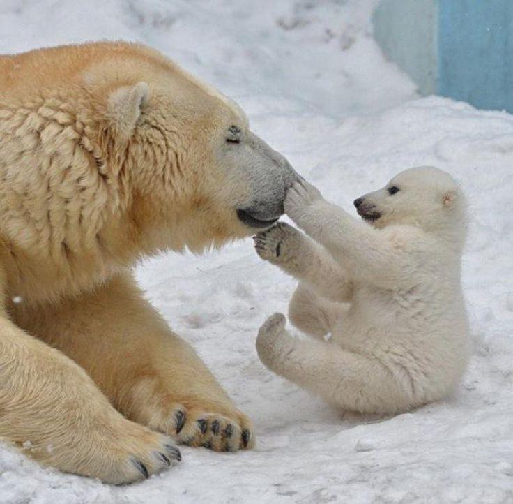 6003 best Wonderful Animals images on Pinterest   Wild animals, Baby elephants and Animal kingdom