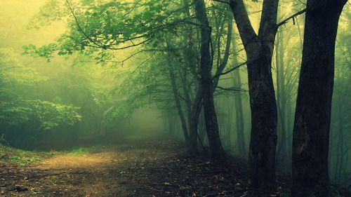 Hoia Baciu Forest, Romania