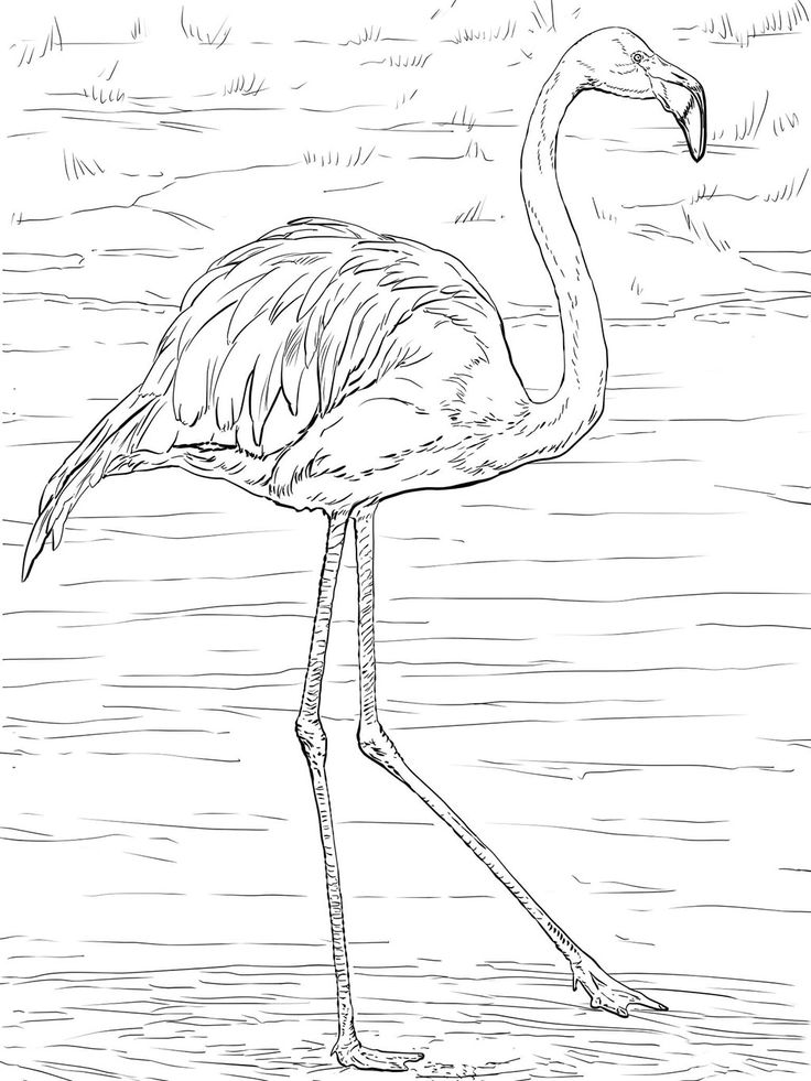 Flamingo Coloring Pages Flamingo coloring page, Coloring