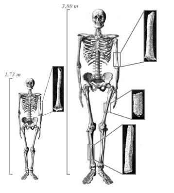 351 best images about nephilim/ (genesis 6:1-4,giant people) on, Skeleton