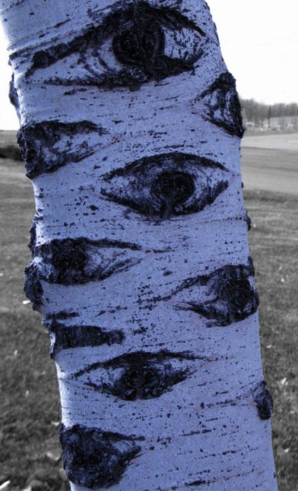 Can you imagine a forest full of these eye trees?
