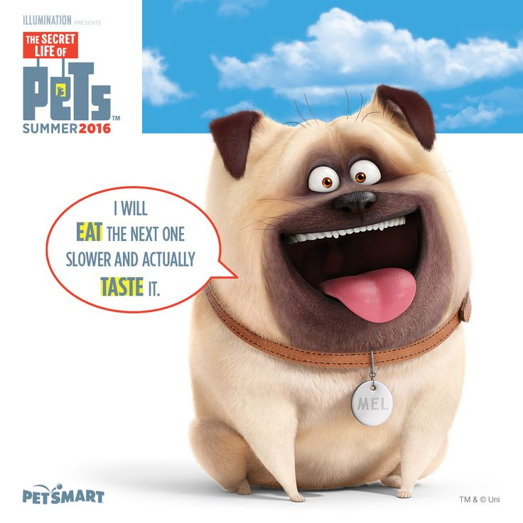Ain't that the truth. thesecretlifeofpets Secret life