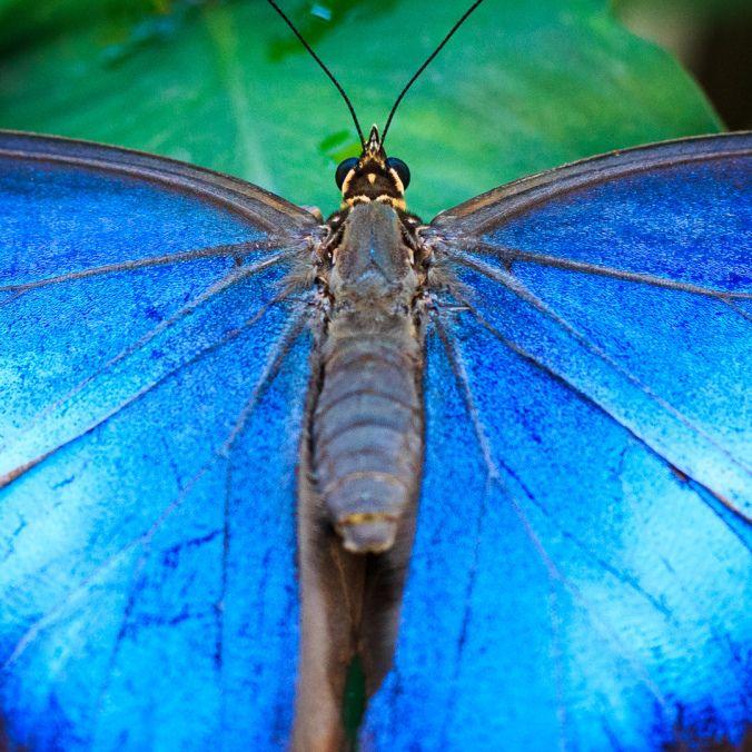 Schmetterlingsmakros