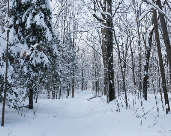 Peaceful photograph of a snow covered forest, taken in Montreal, Quebec. Please note, the two images are a little bit different in