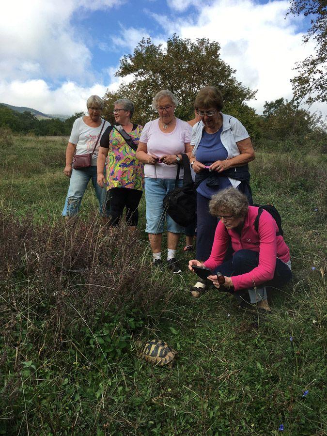 Hiking tour with Swedish group - turtle finding! #trigiro #tour #hike #Greece #nature #wanderlust