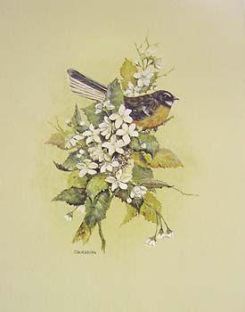 Fantail by Jeanette Blackburn for Sale - New Zealand Art Prints