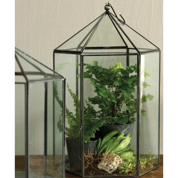 HomArt Pierre Hexagon Terrarium - Large ($95) ❤ liked on Polyvore featuring home, home decor, floral decor and european home decor