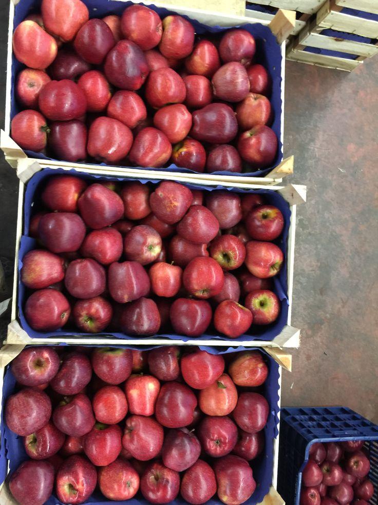 Σε πλαστική κλούβα ή σε τελάρο, ανάλογα με την προτίμηση του πελάτη, τα μήλα Σκάρλετ κερδίζουν τον μέσο καταναλωτή. Η ξεχωριστή μυρωδια προσελκύει απο μικρά παιδιά μέχρι ηλικιωμένους.  Κεντρικά γραφεία Φιλίππου 10, Έδεσσα Τ.Κ.: 58200 Τηλ: 23810- 23237 Φαξ: 23810- 23159 email: sales@realfruit.gr website: www.realfruit.gr  Παναγίτσα Έδεσσας 1ο χιλ. Παναγίτσας- Έδεσσας τ.κ: 58002 Τηλ: 23810- 34303 Φαξ: 23810- 23159