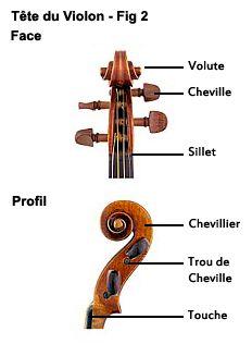 Tete du violon
