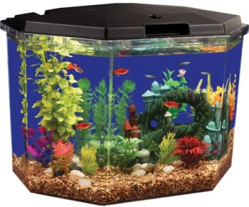 Best 20 hexagon fish tank ideas on pinterest fish tank for Fish tank hood