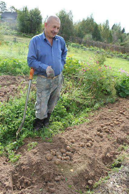 Жизнь горожанки в деревне: (+5) Вася на картошке - помощничек!